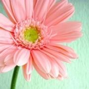 小花儿头像图片大全 唯美文艺的小清新小花儿头像