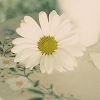 微信qq头像花朵 清新漂亮的花朵qq微信头像图片