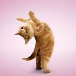 动物瑜伽图片头像大全 好看可爱的瑜伽动物体式头像图片精选