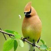 小鸟头像唯美图片大全 好看的小鸟头像微信唯美
