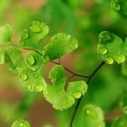 qq头像清新绿色 清爽的头像唯美小清新绿色图片