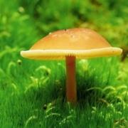 唯美清新蘑菇头像图片大全