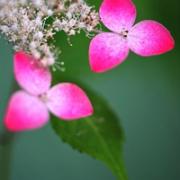 qq头像植物风景 清新好看的风景植物头像图片