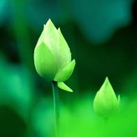 qq头像植物风景