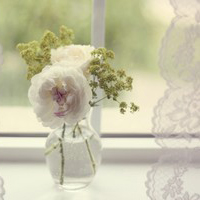 微信头像优雅花朵图片