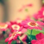 微信淡雅花草头像 简单好看的花头像清新淡雅图片