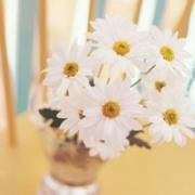 淡雅清新小花头像 好看清新淡雅的鲜花头像图片