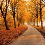 微信头像秋天风景图片 唯美好看的秋天风景微信头像精选