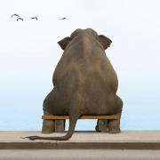 面朝大海大象背影头像图片
