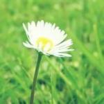 小清新花朵头像唯美意境图片大全