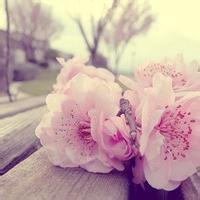 小清新花朵头像