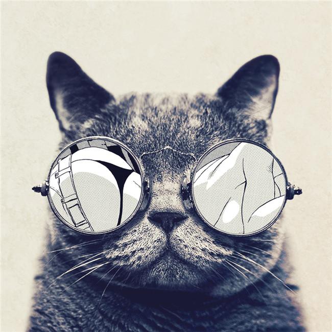猫咪图片大全可爱头像