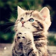 猫咪图片大全可爱头像 高清好看的萌宠猫咪头像图片