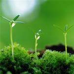 绿色唯美清新头像 高清唯美的绿色清新图片头像