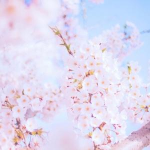 适合做头像的花朵图片