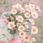 微信头像美丽的花 好看美丽花朵微信头像图片