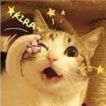 瓜皮猫头像图片大全 高清可爱的瓜皮猫图片头像