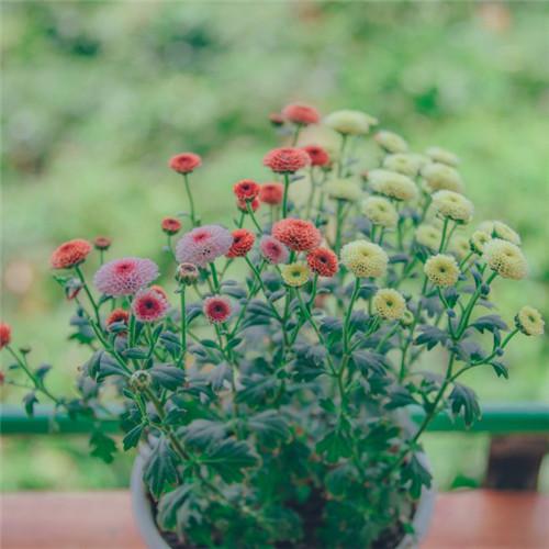 小清新头像植物图片大全