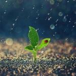 小清新头像植物图片大全 高清好看的微信头像小清新植物