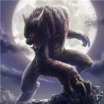 狼回头霸气图片头像 高清狼回头的图片霸气又凶猛头像