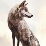 图片2021新图片微信头像狼 各种好看的狼图片头像