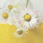 适合妈妈用的花朵微信头像图片 高清适合母亲用的微信头像花朵