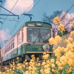 开往春天的列车图片头像