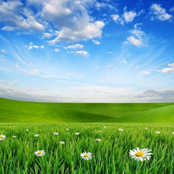 蓝天白云草原头像图片