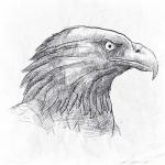 素描老鹰图片头像,好看霸气的鹰图片素描头像