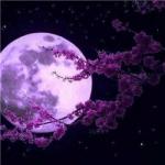 紫月亮图片头像,唯美好看的紫月亮头像图片大全