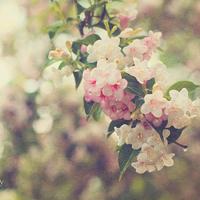 微信头像小清新花朵
