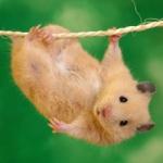 qq头像老鼠可爱图片大全 真实超萌老鼠可爱的头像