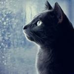 高冷孤独黑猫头像,诡异的黑猫个性头像图片