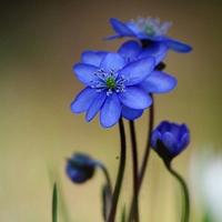 头像花朵图片唯美