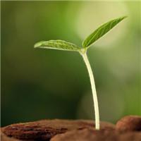 植物芽头像