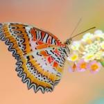 蝴蝶微信头像图片大全,唯美的蝴蝶图片唯美意境头像