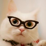 qq头像萌宠猫咪天然呆,天然呆的猫猫卖萌中