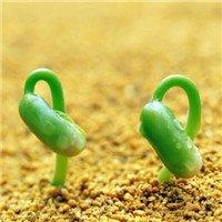 植物芽头像,清新绿色的植物嫩芽头像图片