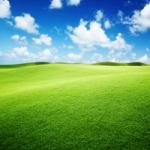 绿色微信头像唯美图片,好看的绿色小清新微信头像