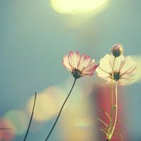 花头像唯美清新 关于花头像小清新风景唯美图片
