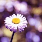 唯美意境小花头像 好看的唯美意境小花头像图片大全
