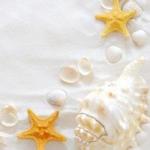 贝壳海星微信头像 清新好看的海滩海星贝壳图片头像