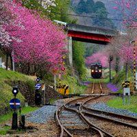 火车道头像图片大全 唯美好看有意境的微信头像火车道