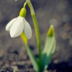 qq头像白色花朵,清新干净的白色花朵QQ头像图片