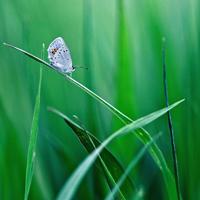 清新蝴蝶头像图片