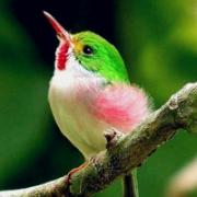 翠鸟的图片头像大全,好看的真实翠鸟头像