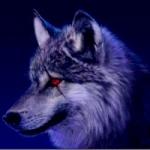 qq头像狼王霸气 霸气凶猛的qq头像狼头狼王图片