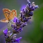 微信头像紫色风景,唯美清新紫色风景的微信头像图片