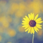 小清新花朵图片头像 唯美好看的清新简单花朵头像
