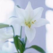 qq头像一朵花 简单清新的一朵花儿头像图片
